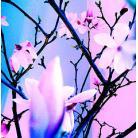 Kwiaty Wschodu
